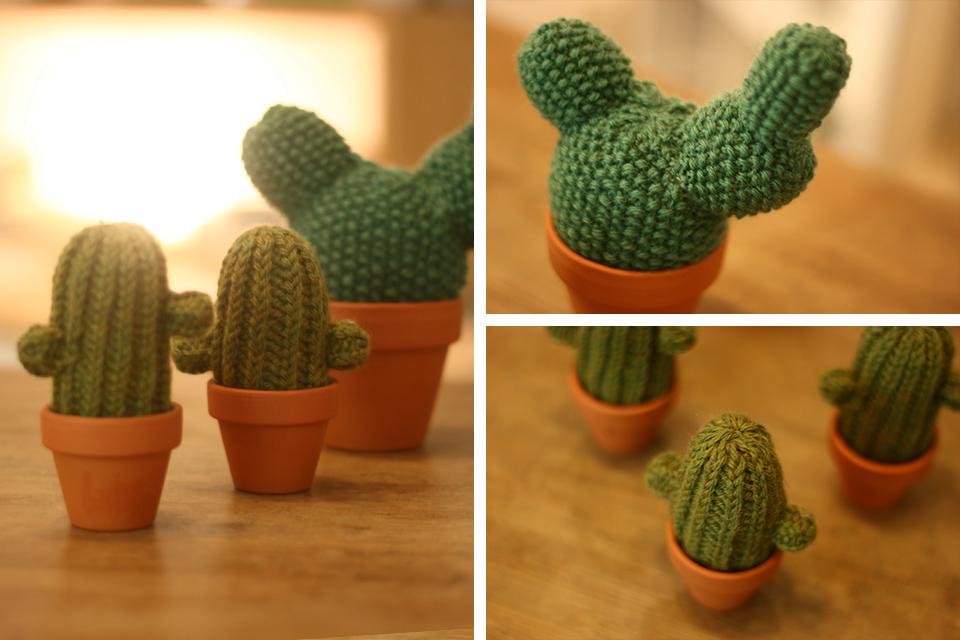 birgit blau kaktus